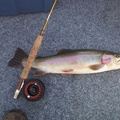 Sheridan Lake 'bow